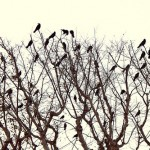 Social media users and crows: What we have in common
